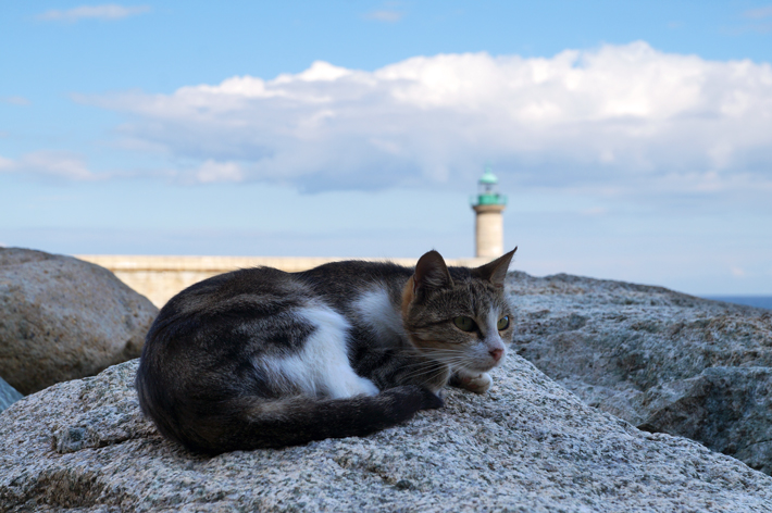 chat-corse1