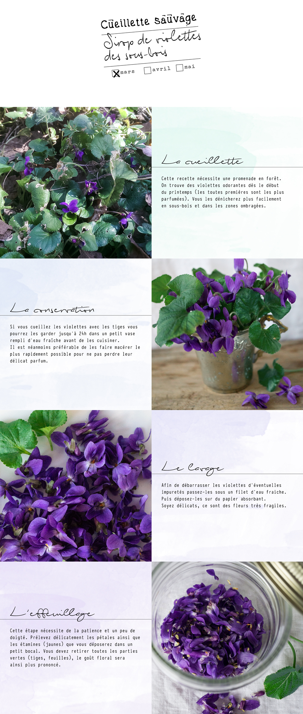bluette.fr // recette sirop violettes 1