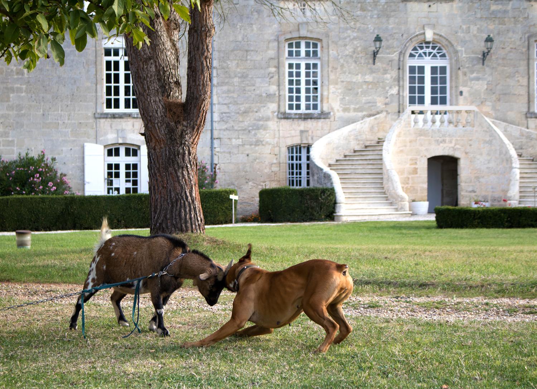 Gaïa-et-biquette-Chateau-des-Arras©Bluette
