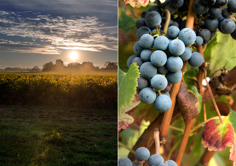 Vignes-Aube-2-Chateau-des-Arras©Bluette